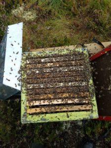 Bier tyter ut av en sterk kube under inspeksjon