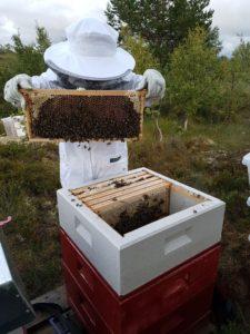 Honningmengde og helsetilstand inspiseres av liten birøkter