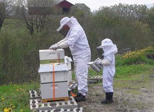To på vei for å sjekke at biene har det bra
