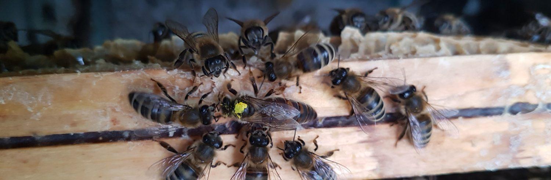 Velsmakende trøndersk honning